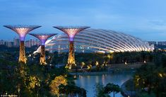 Gardens by the Bay project, Singapore. There are man-made trees made of concrete and steels that have been fitted with solar panels, hanging gardens and rainwater catches, and will be used to display plants from across the globe.