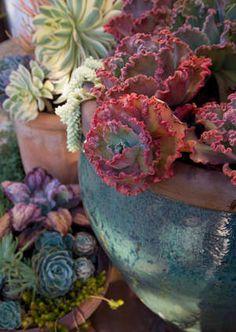 *more gorgeous succulents