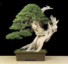 European bonsai with a Japanese touch