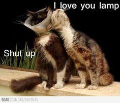 I love you lamp.
