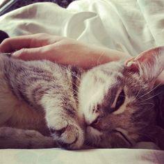Restful kitty