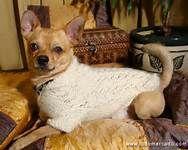 tejidos para mascotas - sexy en crudo