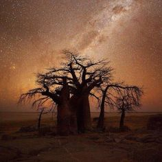 African Nightfall via @Earth_Pics on Twitter