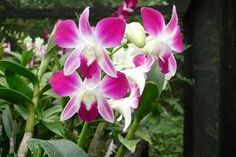 orquideas - Buscar con Google