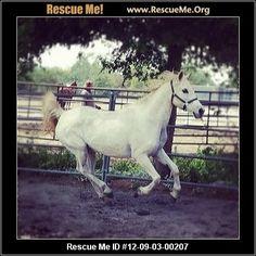 — California Horse Rescue — ADOPTIONS —RescueMe.Org