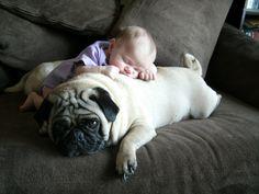 pug pillow!