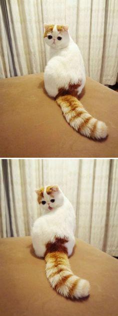 the cutest kitten ever