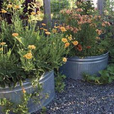 Galvanized-metal feed troughs (with holes drilled in the bottom for drainage) are a simple way to add raised garden beds, and plants ripen quickly in the soil warmed by their reflectivity. | Photo: Jacqueline Koch | thisoldhouse.com