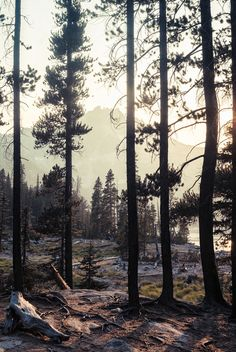 The forest // #nature #outdoor #wilderness