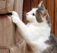 6 Ways to Control Your Cat's Furniture Scratching Habit