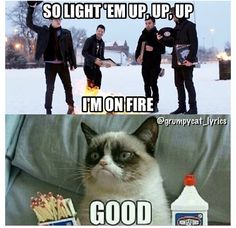 Grumpy Cat sings with Fall Out Boy