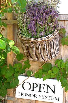 Lavender Honor System-Cape Cod Lavender Farm- Harwich, Cape Cod.