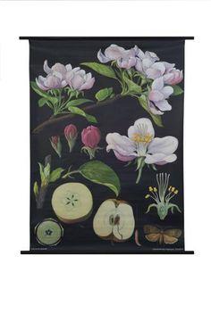 Apple Tree Botanical Poster