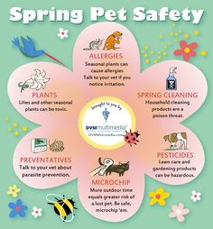 Spring Pet Safety