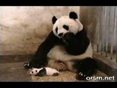 funny animal videos, video video, funni video