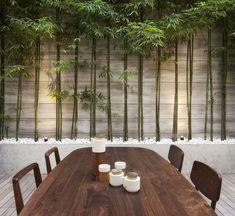 Fint med: rabatt med bambu, belyst underifrån, i vit sten, växande mot en vägg, cementmur till rabatten
