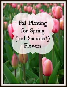 Fall Planting for Spring (and Summer!) Flowers.  Now is the time to start planning next year's garden!