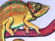 chameleons are cool-book read on youtube