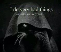 I do very bad things and I do them very well #catoftheday