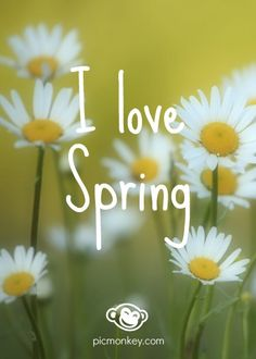 We love Spring! This spring gem was created with PicMonkey's Soften effect and Sue Ellen Francisco font.