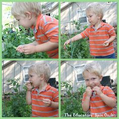 Gardening with toddlers - Snow PEAS!