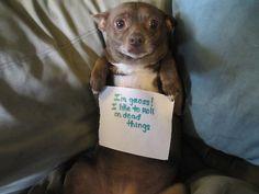Dog Shaming :P