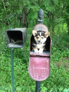 """""""I'm priority mail."""""""