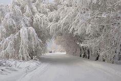 winter snow, tree, west virginia, winter wonderland, winterwonderland, place, winter scenes, the road, traverse city