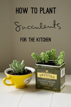 Save those tins and teacups for this DIY: How to Plant Succulents for the Kitchen from Young Austinian. succulent planting ideas, planting succulents, succulents in teacups, kitchen succulents, kitchen plant ideas, plants diy succulents, teacup succulent, how to plant succulents, succulents in tins