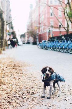puppy jacket