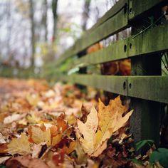 Return to Fall