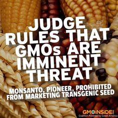 Mexico Judge Rules That GMOs Are Imminent Threat. More Here: https://www.facebook.com/Cornucopia.Institute