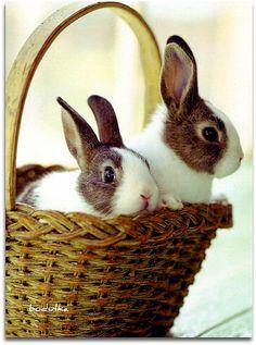 rabbit, anim, bunni bless, bunni lovin, hare, baskets, easter bunni, spring, easter bunny