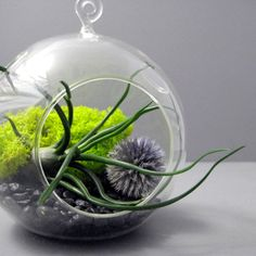 I love these air plants terrariums.   Bulbosa and Echinops Terrarium by seaandasters on Etsy, $25.00