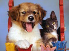 Photos de chiens et de chats