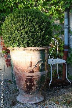 anduz pot, garden ideas, boxes, front doors, gardens, planter, excel combo, topiari, antiqu