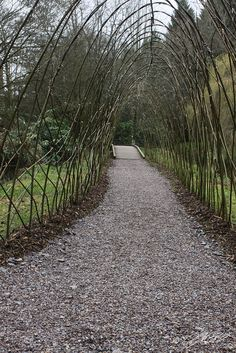 Pussy Willow Arch