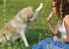 How to #Train a #Dog at Home Like Professional Dog #Trainers