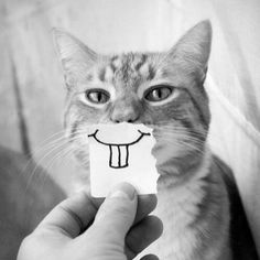 happy faces, drinking games, anim, funny cats, funni, funny cat pics, smile, grumpy cats, funny kitties