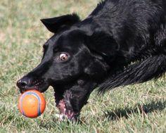I LOVE BALLS! Dont we all.