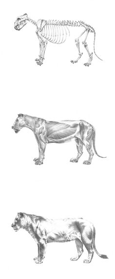 Sian Richards #sianrichards #animali #illustrazione #arte