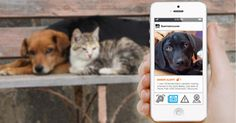 An app for finding missing pets