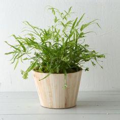 Natural Wood Pot