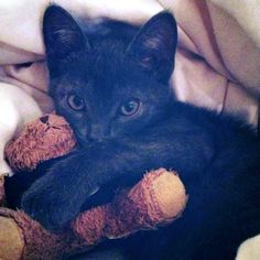 Just a Kitten and Her Teddy Bear