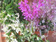 orchids  cadena  de  amor