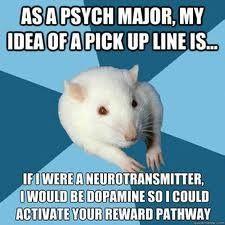 Psych Major Rat