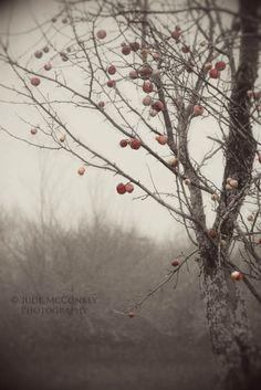 FREE US Shipping apple orchard monochrome fog landscape photography nature home decor office decor
