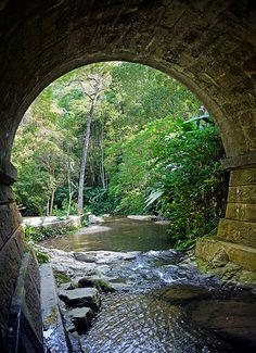 Ponte - Riacho - Floresta da Tijuca - Parque Florestal - Rio de Janeiro - Brasil