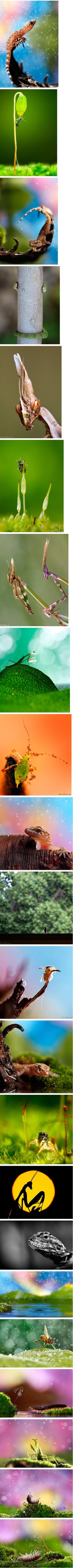 Macro Shots By Nadav Bagim