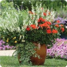 potted flowers, flower pots, patio gardening, entir site, the heat, deck planters, patio ideas, outdoor flowers ideas, container gardening